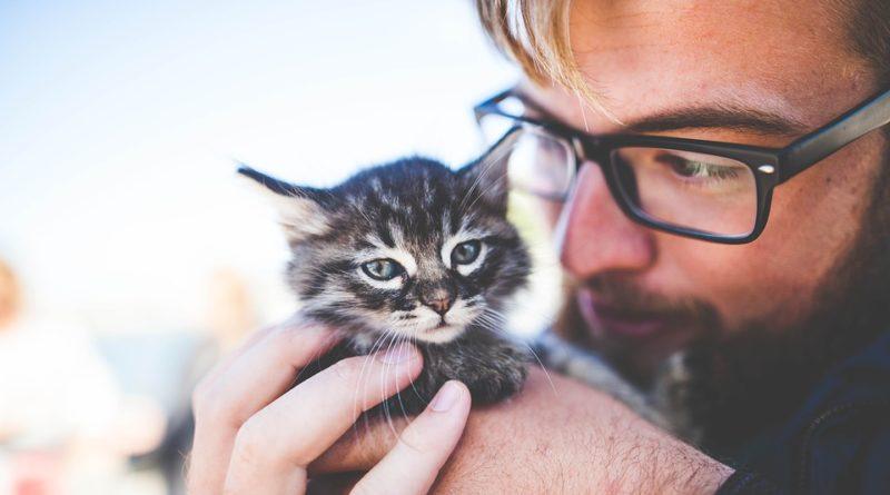 Chcete si pořídit kočku? Kolik vás bude stát?