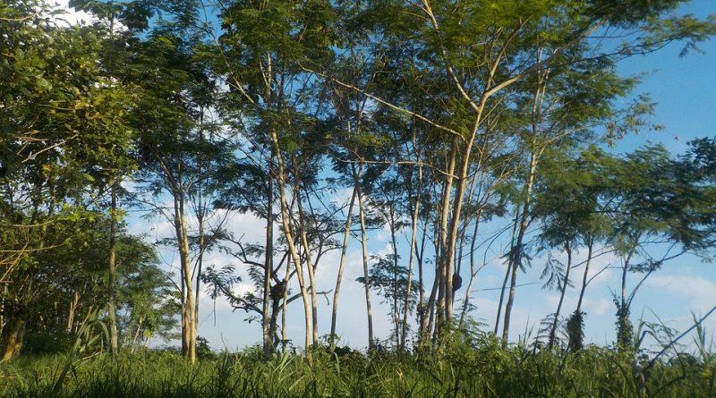 Na záchranu Amazonského pralesa se minuly miliony. Vše započal DiCaprio